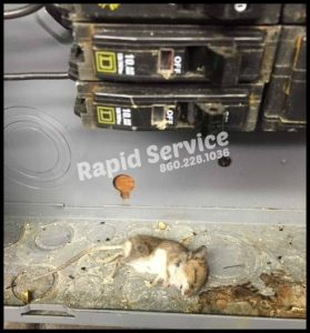 mouse found in electrical panel manchester ct electrician